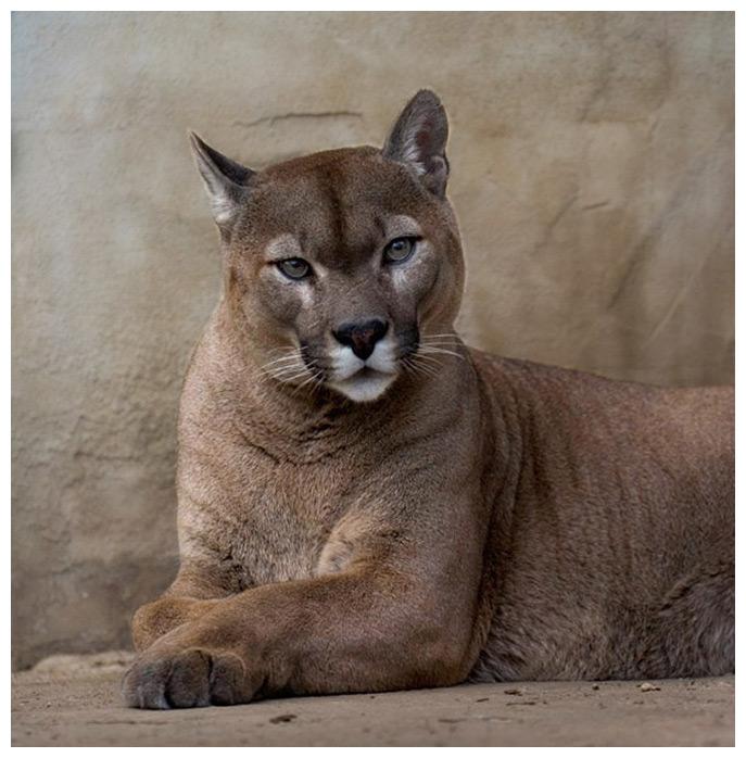 der kleine Panther :-)