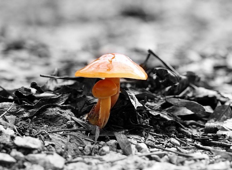 Der kleine Pilz