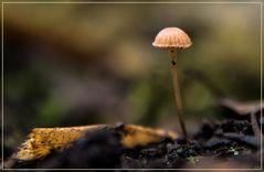 Der kleine Pilz in meinem Garten