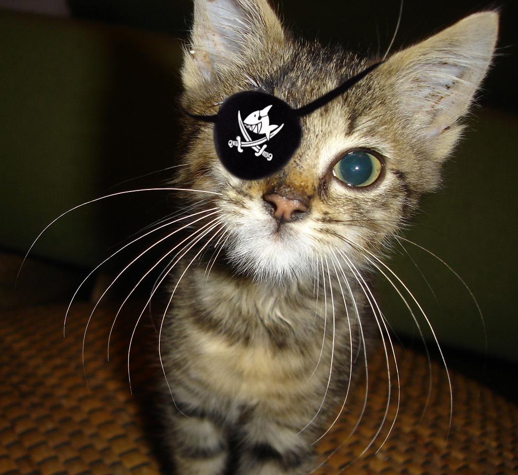 ... der kleine Pirat ...