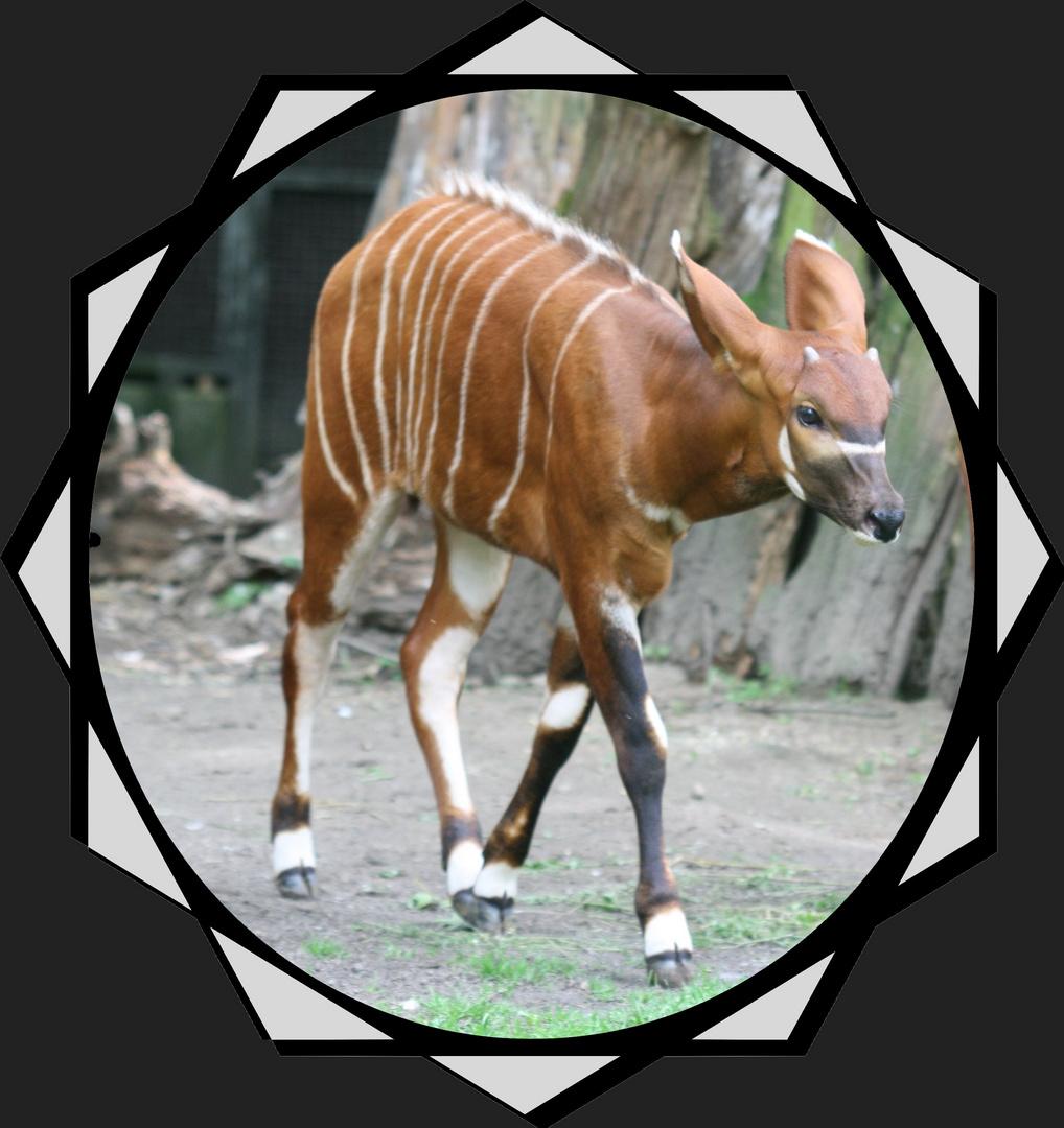 Der kleine Prinz! Foto & Bild | rahmenkunst, rahmen + allerlei, zoo ...
