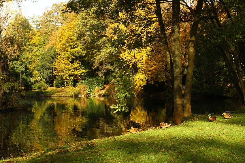 Der kleine See im herbstlichen Stadtpark
