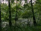 Der kleine See im Wald