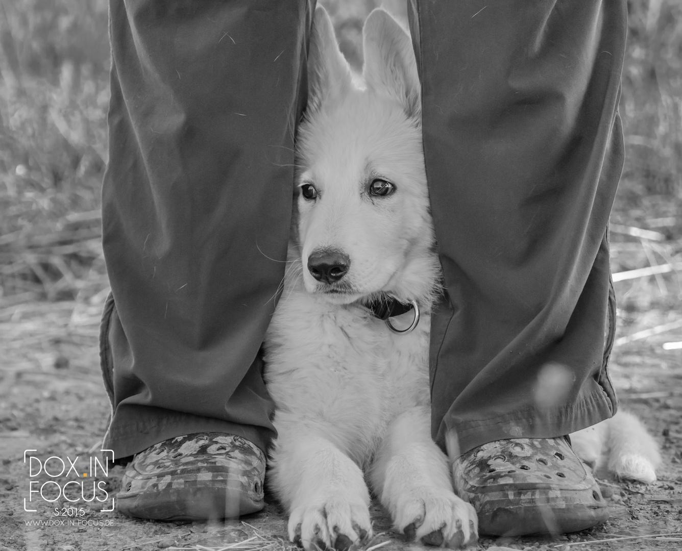 Der Kleine Thoni Foto Bild Tiere Haustiere Hunde Bilder Auf
