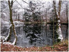 Der kleine Waldsee