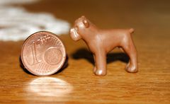 der kleinste Hund und Freund des Menschen