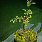 Der kleinste Obstgarten der Welt