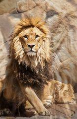 Der König #2