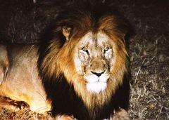 Der König... er war so nah, dass mein Herz fast stehen geblieben ist.