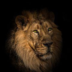Der König (le roi)