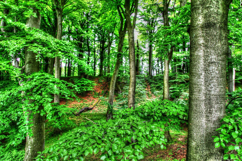 Der Königsstuhl und sein Wald