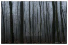 Der Königswald im Nebel