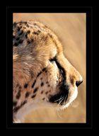 Der Kopf des Geparden