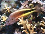 Der Korallenwächter