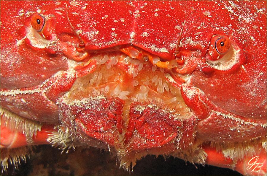 Der Krabbe aufs Maul geschaut.