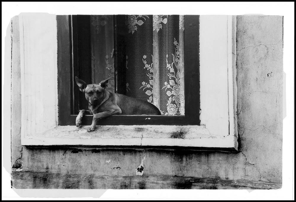 der Krakauer Hund