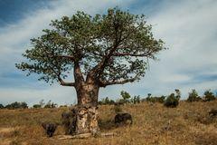 Der Kratzbaum....