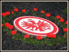 Der Kreis schloss sich in Aachen ... Aufstieg 2012!