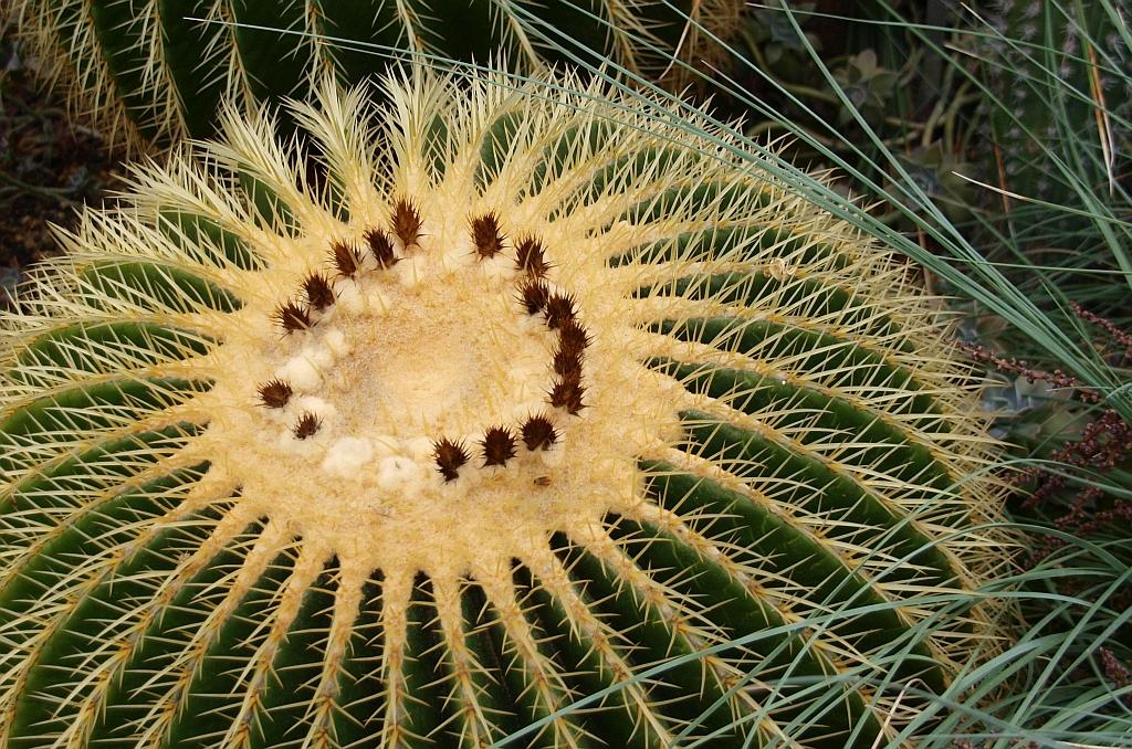 Der Kreis von Kaktushenge...