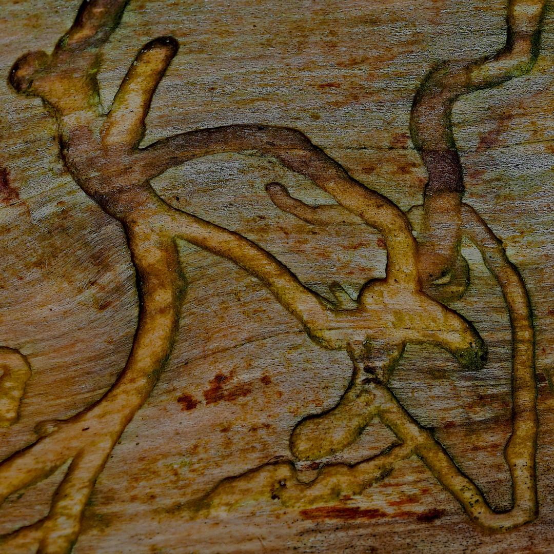 Der Künstler ist nur ein kleiner Wurm... - L'artiste est un vers du bois...
