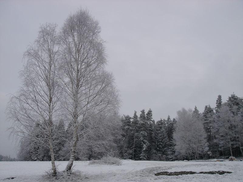 Der kürzeste Winter