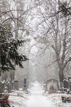 Der kurze Moment vom Winter