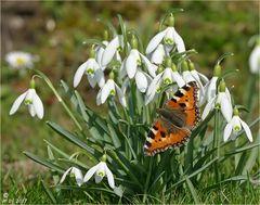 Der kurze Traum vom Frühling.....