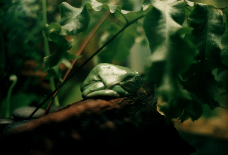 der lächelnde Frosch