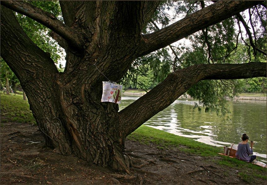 Der Landwehrkanal und seine Bäume 2