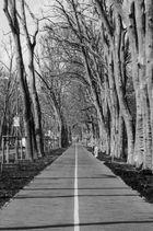 Der lange Weg zum Park