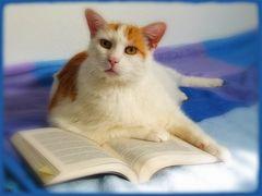 Der Leser...