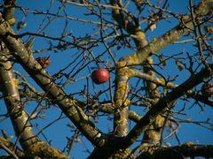 Der letzte Apfel II