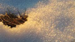 ...der letzte Schnee...