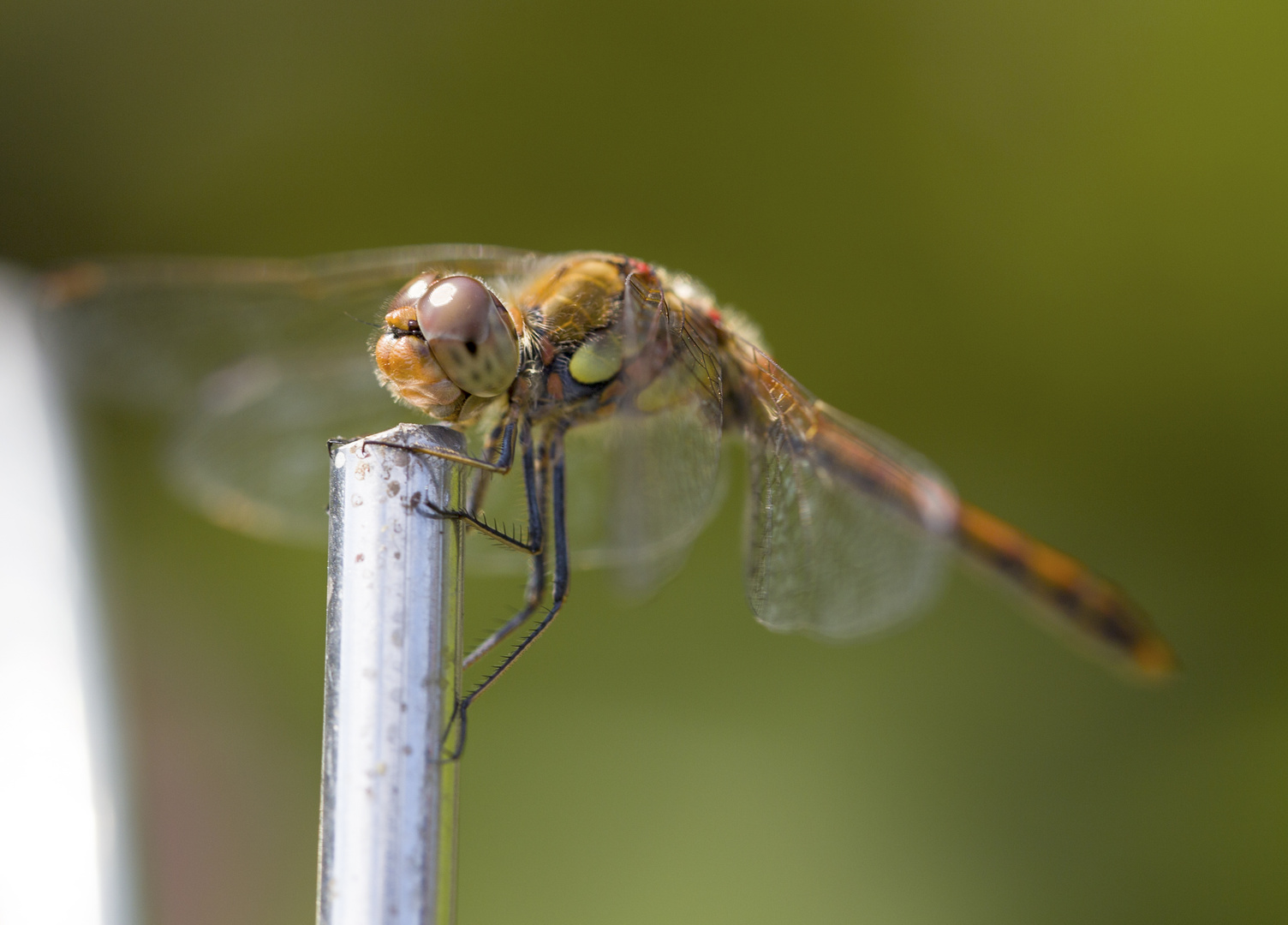Der Libelle ins Gesicht geschaut.....
