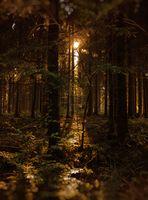 Der Lichtschein im Wald