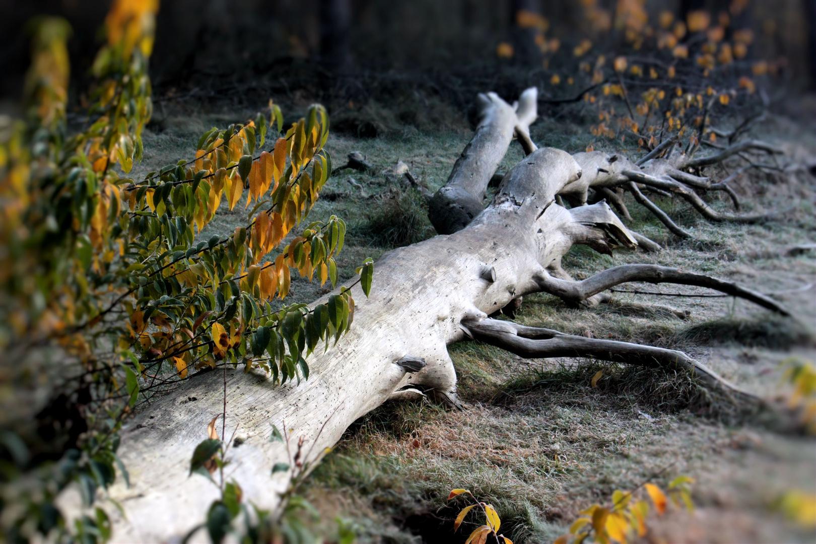 Der Liegende Baum
