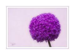 Der Lila Baum