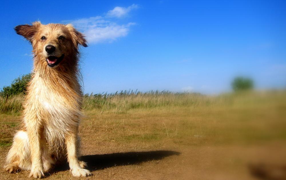 """Der """"Lionking"""" der Hunde"""