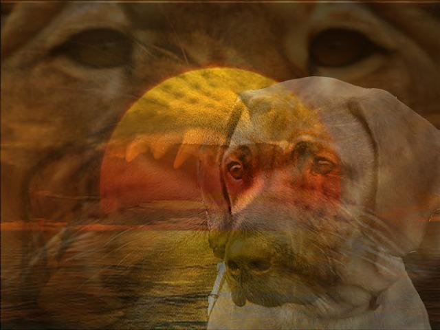 """"""" Der Löwenhund """""""