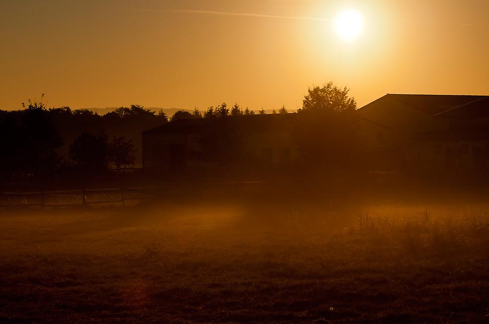 Der Löwenzahn beim Anblick des Morgennebels V2