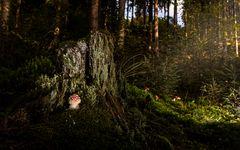 Der Märchenwald