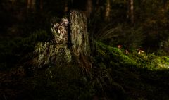 der Märchenwald II