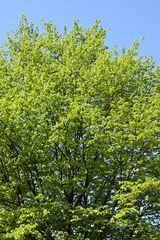 Der Mai ist gekommen - die Bäume schlagen aus :-)
