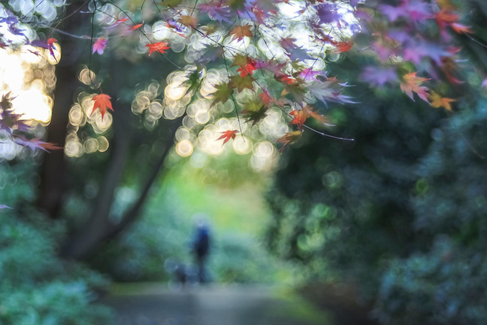 Der Mann im Blätterwald II