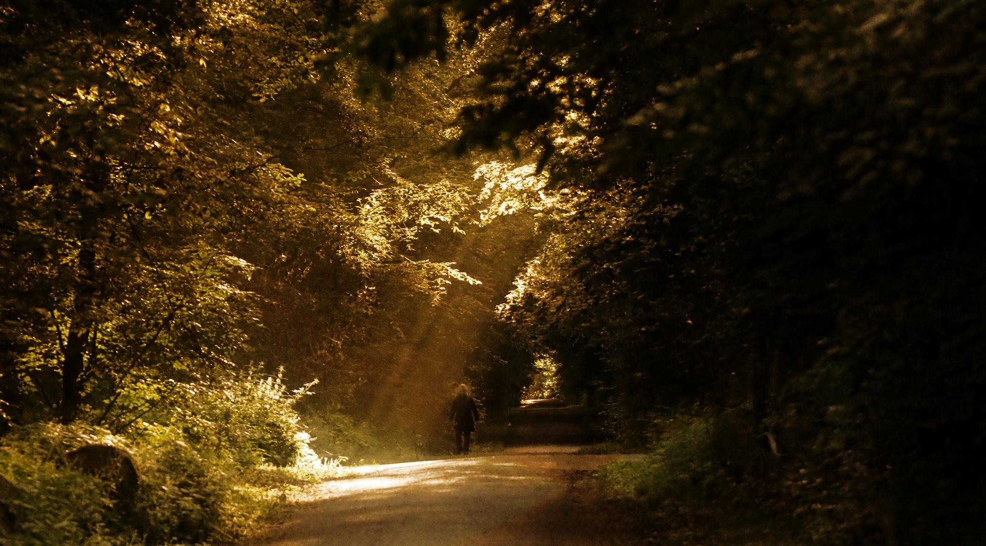 der Mann im Wald