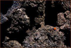 Der Marienkäfer auf dem Ätna