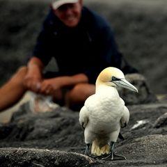 Der Mensch und der Vogel