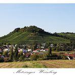 Der Metzinger Weinberg