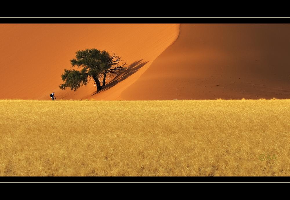 """der Mittigmann und """"sein"""" Baum"""