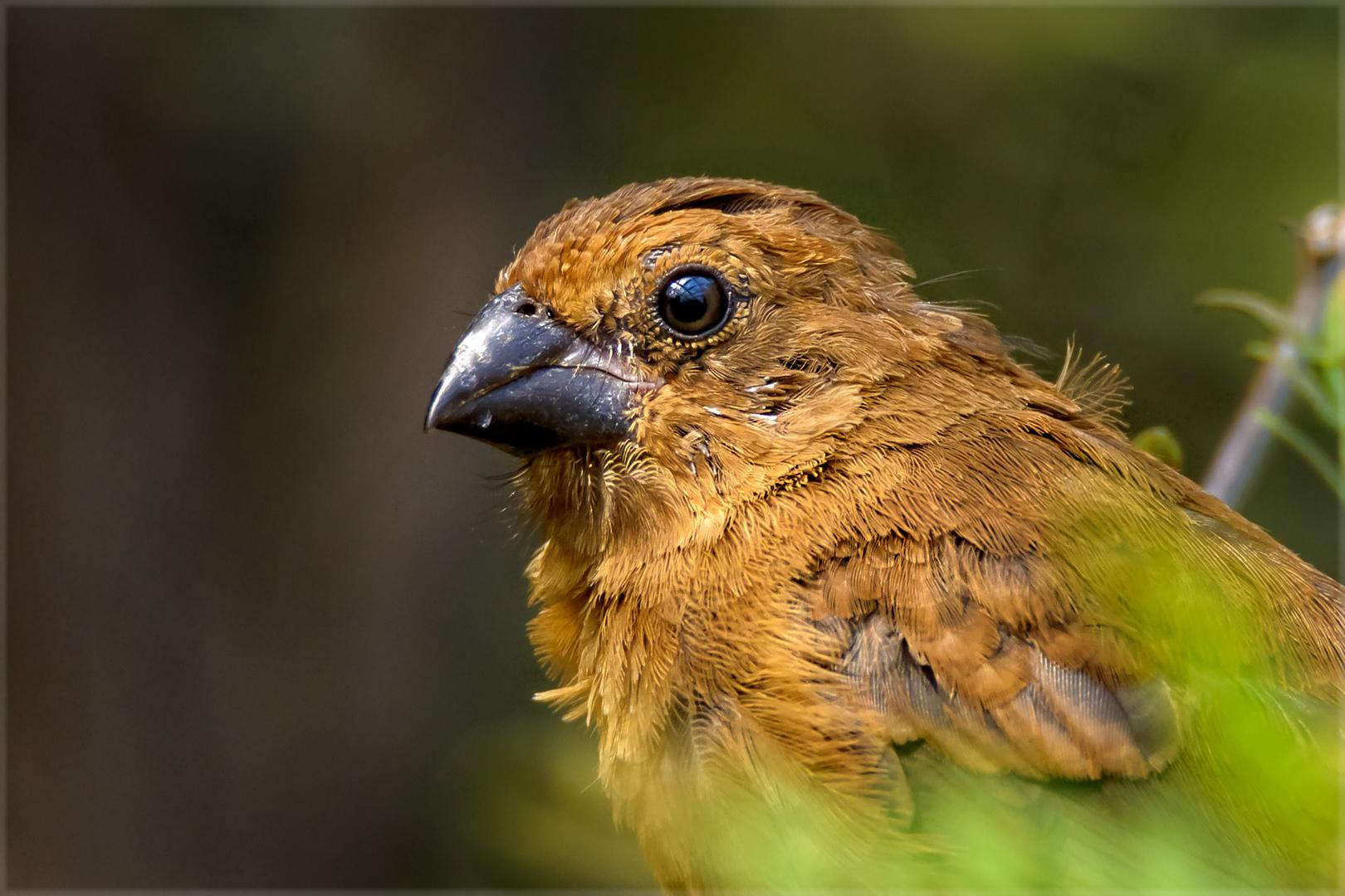 Der Mittwochs-Vogel
